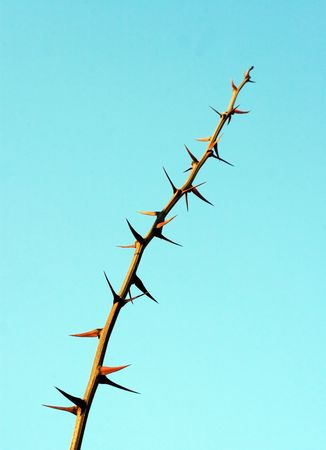 branch with a thorn on sky background Stock Photo