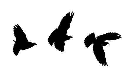 three flying bird silhouettes Banco de Imagens