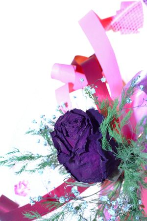 jilted: dry rose on white background