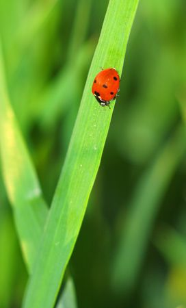 ladybug on a green plant Stock Photo - 1132773