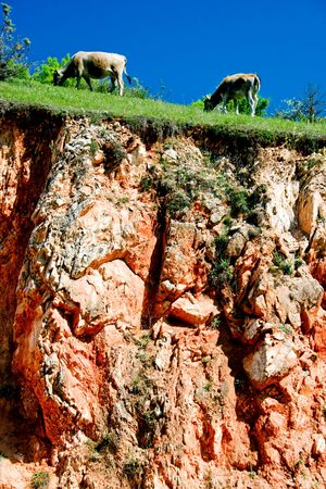 steep cliff: cows grazing on a steep cliff Stock Photo