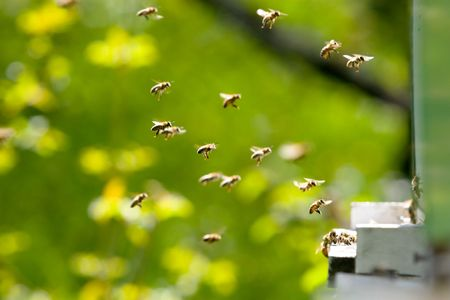 bees flying in and out of a hive
