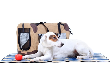 Jack Russel Terrier with a carrying bag against white background Stock Photo - 12431199