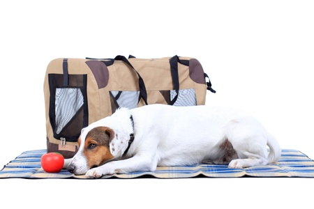 Jack Russel Terrier with a carrying bag against white background Stock Photo - 13286600