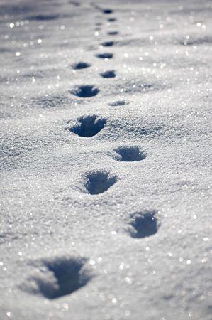 animal footprints in the snow