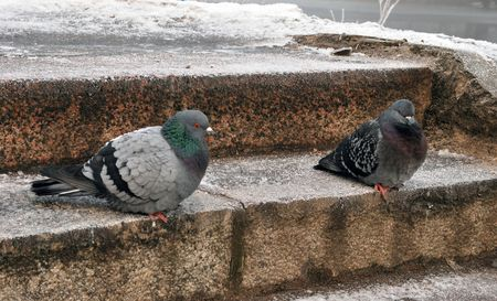 two pigeon sitting on stair