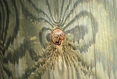 wood texture Stock Photo - 4561766