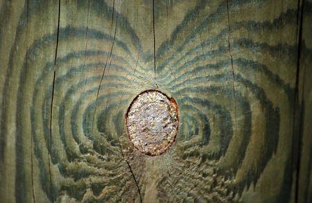 wood texture Stock Photo - 4561829