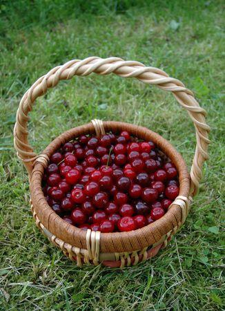 cherries in basket on grass Stock Photo