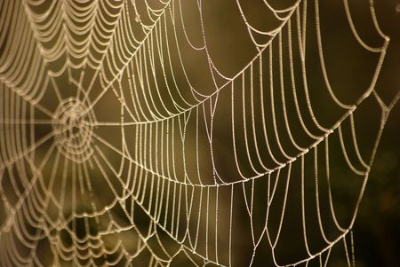 Necklace. Morning dew on a web.    photo
