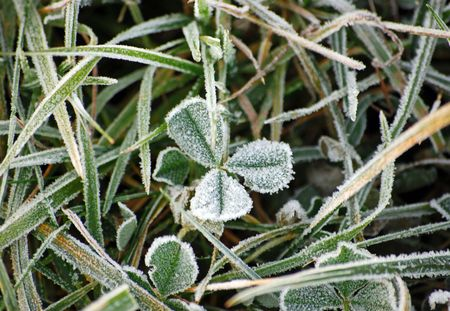 winter scenery with frost shamrock       Stock Photo