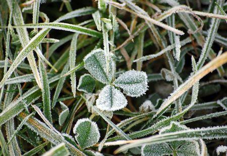 winter scenery with frost shamrock Standard-Bild
