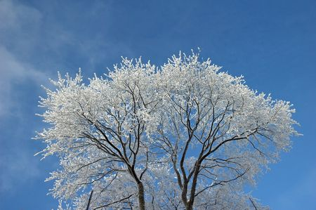 frosted tree at winter, covered snow Stock Photo - 6259132