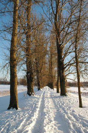 Majestic winter alley in the warm colors of the early sun Stock Photo - 6392321