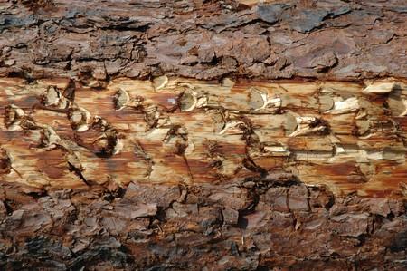 wood texture Stock Photo - 7030100