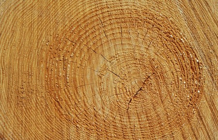 wood texture with natural patterns Stock Photo - 7058108