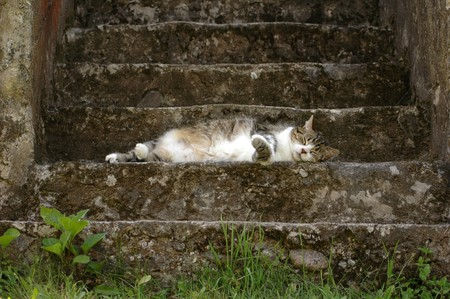 A kitten resting in the stairway