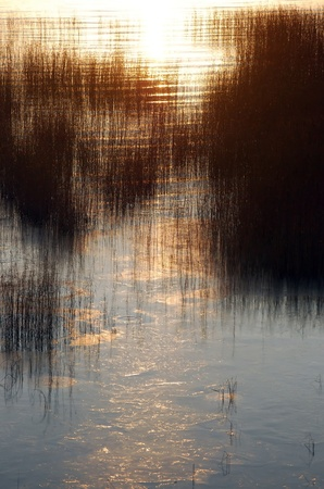 bulrush in the sea against sunlight Stock Photo - 8496850