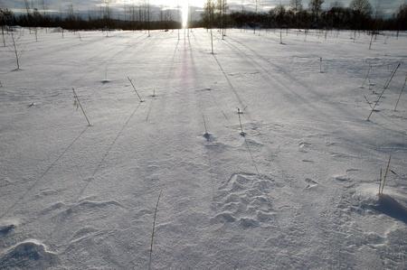 sunlight over winter landscape Stock Photo - 8577644