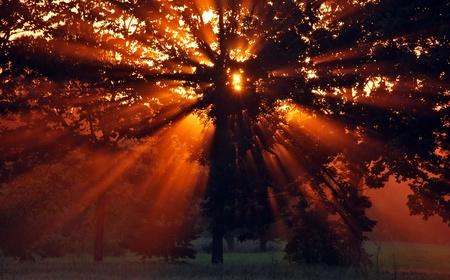 sunset through the dark forest photo