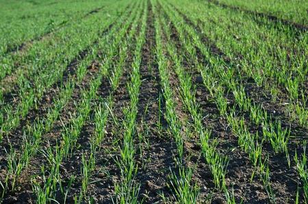 Farm crops landscape Stock Photo - 9761920