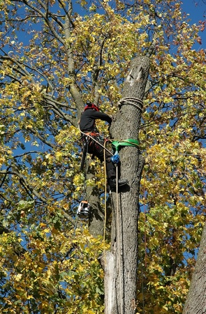 lumberjack with chainsaw on tree