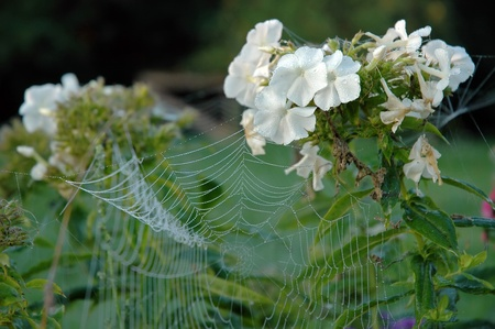 Close up view of the strings of a spiders web with flowers photo