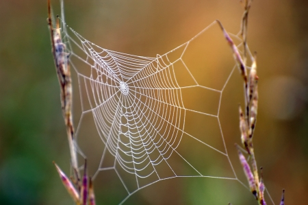 Close up view of the strings of a spiders web Stock Photo