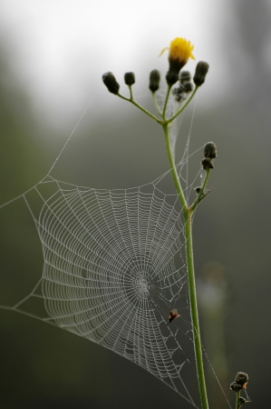 Close up view of the strings of a spiders web with flowers