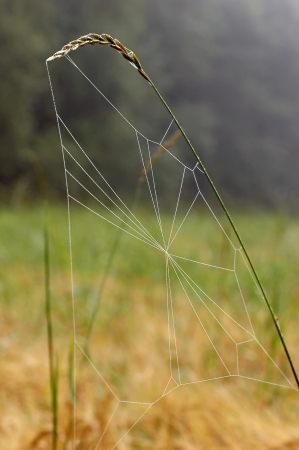 Close up view of the strings of a spiders web beginning Stock Photo - 15149142