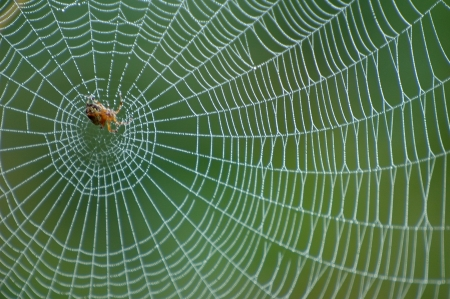 Close up view of the strings of a spiders web Standard-Bild