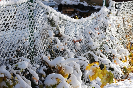 Frozen snowy fence at the winter Stock Photo - 16023429