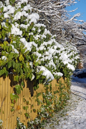 Frozen snowy fence at the winter Stock Photo - 16023237