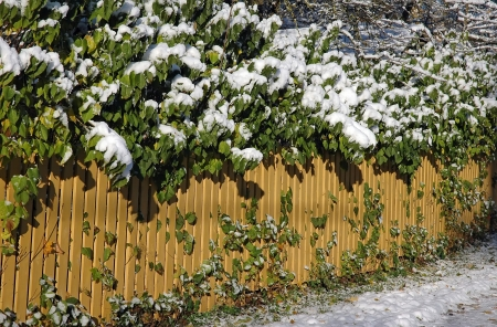 Frozen snowy fence at the winter photo