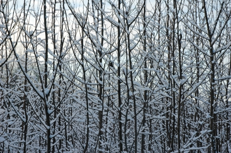 trees and underwood texture in a winter forest Stock Photo - 17204488