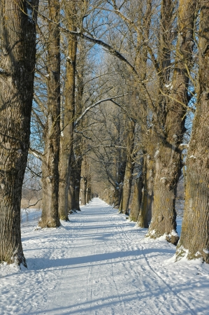Majestic winter alley in the warm colors of the early sun Stock Photo - 17524747