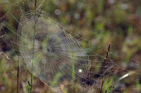 Close up view of the strings of a spiders web photo