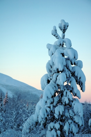 beautiful Lapland winter forest and mountain photo