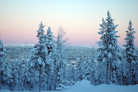 beautiful Lapland winter forest  View to G�llivare, Sweden photo