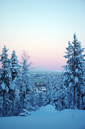 beautiful Lapland winter forest photo