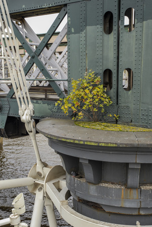 shurb: Bridge detail with shrub in London, UK