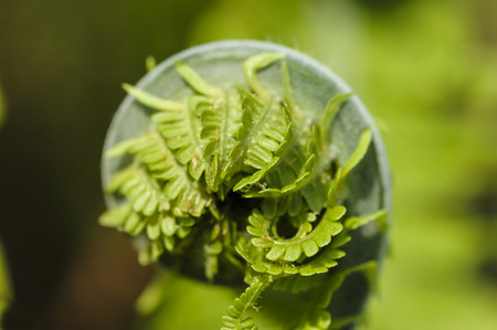 Fresh green leaves of a fern in the blurry background Stock Photo