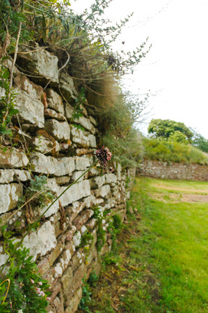 old stone wall with grass
