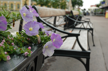 violet flowers with chairs on street