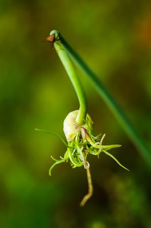 bug on plant Standard-Bild