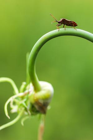 bug on plant Stock Photo