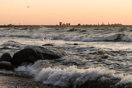 seagull flies on stormy sea. Tallinn silhouette, the capital of Estonia on background