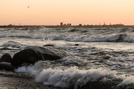 seagull flies on stormy sea. Tallinn silhouette, the capital of Estonia on background