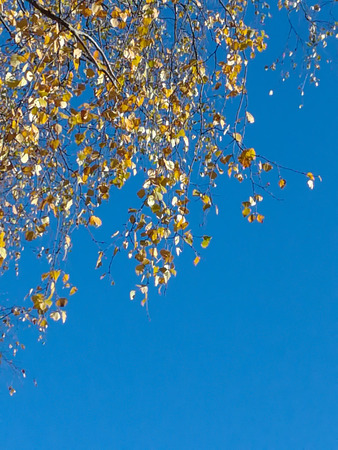 tree branches perspective isolated on blue sky Stock Photo