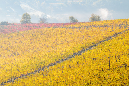 Chianti vineyard landscape in autumn, Tuscany, Italy